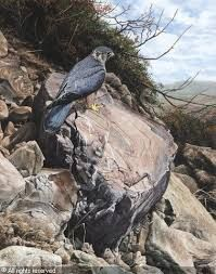 Bird of Prey Paintings by Alan M HuntImage result for alan m hunt British Wildlife, Birds Of Prey, Eagles, Paintings, Artist, Animals, Animales, Eagle, Paint