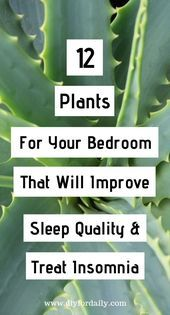Having a problem with sleeping is common nowadays. There are so many people all over the world who cannot sleep because of work pressure, stress and it results in health decrease. Inside Plants, Cool Plants, Inside Garden, Ivy Plants, Outdoor Plants, Plants Indoor, Indoor Plants Low Light, Spider Plants, Bedroom Plants