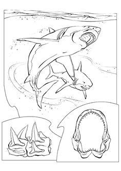 Dessin de plusieurs requins blancs très méchants à colorier.