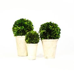 Boxwood Topiary (3 sizes) by Mintwood Home