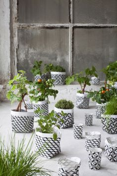 Plant bags by Marie Michielssen for Serax