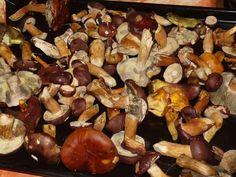 Nakládané houby: 10 nej receptů na nálevy | MAKOVÁ PANENKA Ham, Stuffed Mushrooms, Food And Drink, Canning, Vegetables, Health, Diet, Syrup, Recipes