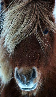 Lindo cavalo na neve