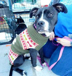 Hanna & Elise - Dickson Petco Adopt-athon February 2016 Last Chance Pet Rescue (lastchancepetrescue-dickson@yahoo.com)