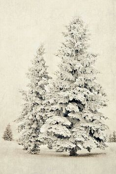 I love winter and I love the snow, would love to go to a place where every tree looks like this for a few months! I Love Snow, I Love Winter, Winter Snow, Winter Christmas, Christmas Trees, Christmas Decor, Merry Christmas, Hirsch Illustration, Winter Magic
