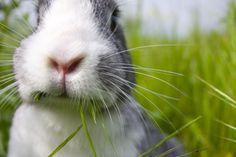 Raising Rabbits For Tough Times