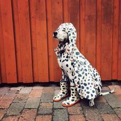 """""""I turn seven soon"""" writes @mugidal  #dogsofinstagram #dog by: @dogsofinstagram"""