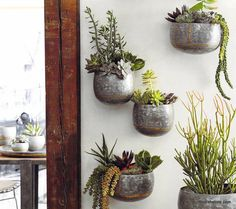 Curvy wall planters from our Braza Collection are made from heavy galvanized iron sheet and embellished with brass beading and brazing. These substantial pieces maybe used indoors or out; left outdoor