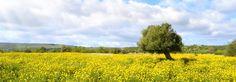 Campo con fiori gialli e con Raggi di Sole File Link: https://it.fotolia.com/id/72682031