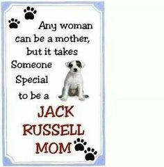 Jack Russell moms are special!