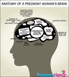 Anatomy of a Pregnant Woman's Brain - Pregnancy Humor