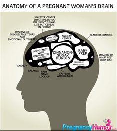Anatomy of a Pregnant Woman's Brain - Pregnancy Humor