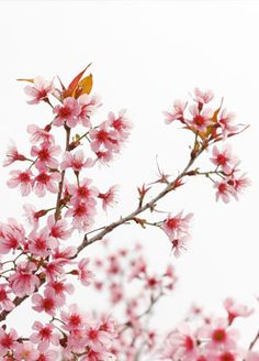 Quadro em madeira de demolição para parede do Ofurô - Flor de Cerejeira