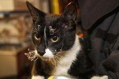 앞발 녹이는 고양이 | 유머 게시판 | 루리웹 모바일