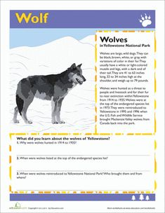 These reading comprehension worksheets will take your grader on a tour of the park, from the wetlands to the meadows and its 2000 pound bison. Homeschool Kindergarten, Classroom Activities, Book Activities, Homeschooling, Preschool, Science Worksheets, School Worksheets, Yellowstone National Park, National Parks