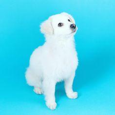 Blue/White Yo Doggie