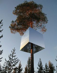A hotel in a tree. Guests access the hotel via a rope ladder or bridge. Visit the site for more pics