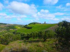 informatie-over-een-vakantie-naar-Kreta Nars, Vineyard, Outdoor, Crete, Outdoors, Vine Yard, Vineyard Vines, Outdoor Games, The Great Outdoors