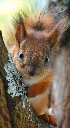 #Eichhörnchen Fotografie