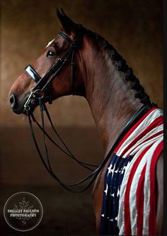 Rhett is the first Kentucky bred horse to be named to the high performance Dressage Team and is on the road with his partner Jim Koford to make a bid for the 2012 Olympic Team. The American Flag was placed on Rhett to illustrate… he was born…raised and primarily trained in the U.S.A. …Rhett would be the first Kentucky bred horse to represent the U.S.A. in the Olympics…  blog.shelleypauls...