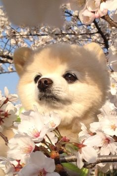 they said i could be anything, so i became a cherry blossom.