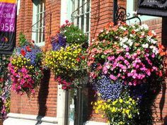 hanging-flower-baskets enhances the appeal of your property