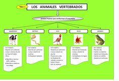 vertebrados - Bing images
