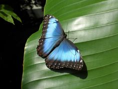 Enter a lush tropical garden and walk amongst thousands of freely flying butterflies! Escape from the cold and enjoy a vacation in a day at Cambridge Butterfly Conservatory. Butterflies Flying, Tropical Garden, Conservatory, Cambridge, Lush, Travel Tips, Jewlery, Butterfly, Canada