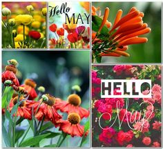 Good Morning Sunshine, Good Morning Love, Hello Mars, Joelle, New Month, Hello Spring, Months In A Year, May, Mood Boards