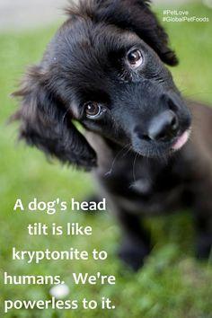 True. I'd add puppy eyes to that! #PetLove