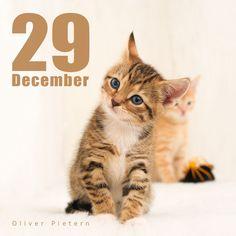 Dec 29 by hoschie on DeviantArt