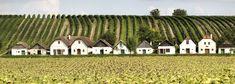 Kellergassen sind das Markenzeichen des Weinviertels. Begeben Sie sich auf eine Entdeckungsreise! Places To Go, Communities Unit, Basement, Road Trip Destinations, Environment, Wine, Destinations