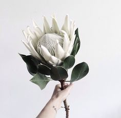King Protea wedding Bouquet