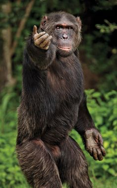 Photos: Kenya's Wildlife and Safari Camps Nature Animals, Animals And Pets, Funny Animals, Cute Animals, Strange Animals, Primates, Mammals, Wild Animals Pictures, Funny Animal Pictures