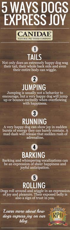 5 Ways Dogs Express Joy | CANIDAE Blog