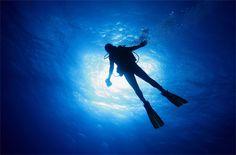 Underwater Photography – The Scuba Diver