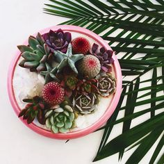 Another day in paradise! Happy Thursday everyone. #prettyplanting #succulentobsession #palm #vintage #oneofakind #shoppigment