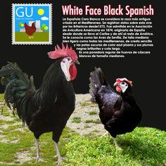 310 Ideas De Animals Granja Aves De Corral Gallinas Gallinas Y Gallos