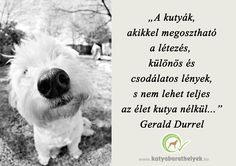 Nature Animals, Animals And Pets, Gerald Durrell, Westies, Qoutes, Dog Cat, Motivational Quotes, Humor, Feelings