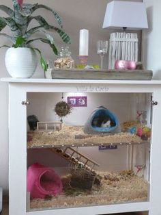 Guinea pig cage from repurposed dresser
