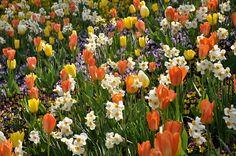 Das Motiv zeigt ein Blumenfeld. Tulpen und andere bunte Blumen blühen in der Sonne und erzeugen ein ruhiges, heiteres Flair.