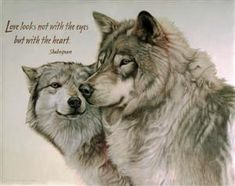 Find wolf figurines, wolf t shirts, wolf art and wolf pictures at EverythingWolf. Great wolf and dog lover gifts, Popular and unique items. Beautiful Wolves, Animals Beautiful, Beautiful Creatures, Cute Animals, Wolves In Love, Baby Wolves, Beautiful Artwork, Wolf Qoutes, Lone Wolf Quotes