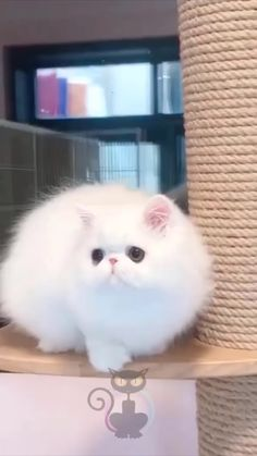 Funny Cute Cats, Cute Baby Cats, Cute Cats And Kittens, Cute Funny Animals, Cute Babies, Cute Wild Animals, Cat Gif, Animal Pictures, Cat Lovers
