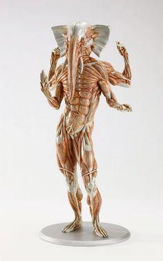 An 'anatomical' sculpture of Ganesha