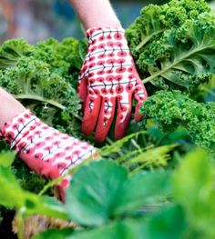 Cute KRYDDNEJLIKA gardening gloves in red (and also in turquoise). Available in S/M or M/L for $1.99.