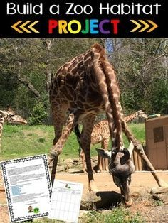 The Build a Zoo Habitat Project is a fun way to teach your students about animal habitats using a project-based learning approach. During this project, your students become Habitat Creators for a local zoo. They will pretend that a local zoo has contacted them to design a habitat for one of their animals.