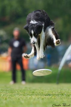 I've heard of flying squirrels, but flying dogs? That's preposterous!