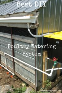 Easy DIY PVC water system for ducks and chickens.