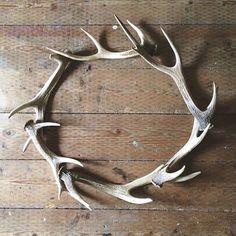 Antler Wreath, Antler Art, Antler Jewelry, Deer Antler Crafts, Hunting Crafts, Deco Originale, Theme Noel, Oh Deer, Christmas Decorations
