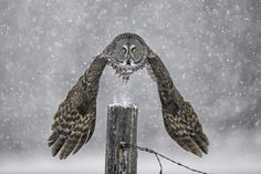 Photograph Take Off, Eh! by Daniel Parent on 500px